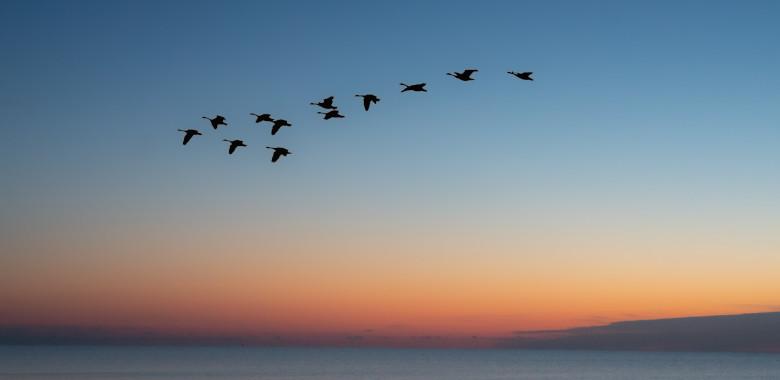 migración Microsoft Dynamics 365